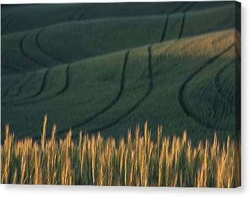 Green And Gold Canvas Print by Latah Trail Foundation