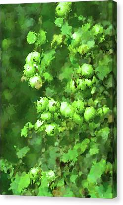 Green Apple On A Branch Canvas Print by Toppart Sweden