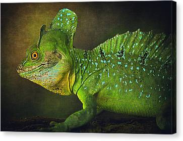 Green Basilisk Canvas Print by Maria Angelica Maira
