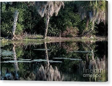 Green Cay Wetlands, Florida Canvas Print by Mark Newman
