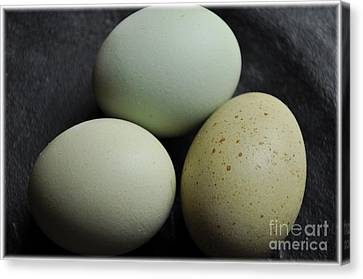 Green Eggs Canvas Print by Cheryl Baxter