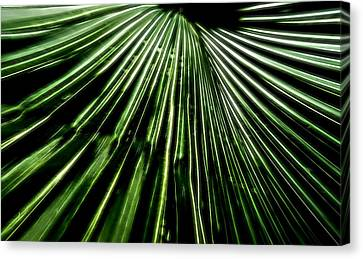 Green Fibers Canvas Print by Dan Sproul