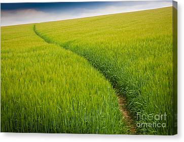 Green Field Canvas Print by Michael Hudson