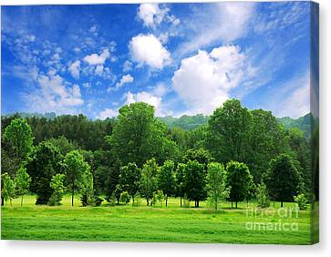 Green Forest Canvas Print by Elena Elisseeva