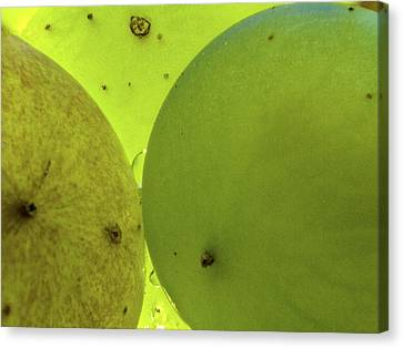 Green Grape Close Up Canvas Print by Jean Noren