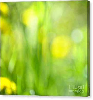 Green Grass With Yellow Flowers Abstract Canvas Print by Elena Elisseeva