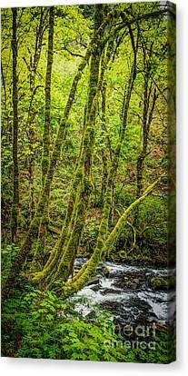 Green Green Canvas Print by Jon Burch Photography