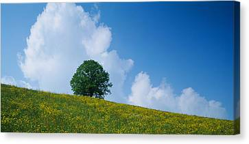 Green Hill W Flowers & Tree Canton Zug Canvas Print by Panoramic Images
