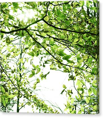 Green Leaves Canvas Print by Blink Images