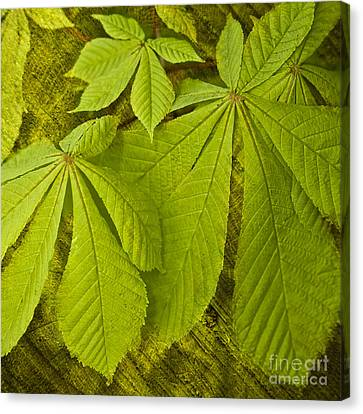 Green Leaves Series Canvas Print by Heiko Koehrer-Wagner