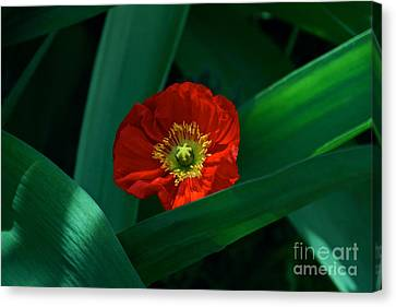 Green Loves Red Loves Green Canvas Print by Byron Varvarigos