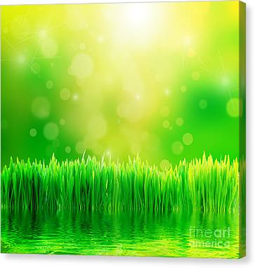 Green Nature Background With Fresh Grass Canvas Print by Michal Bednarek