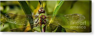 Green On Green Canvas Print by Mitch Shindelbower