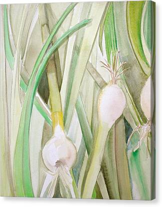 Green Onions Canvas Print by Debi Starr