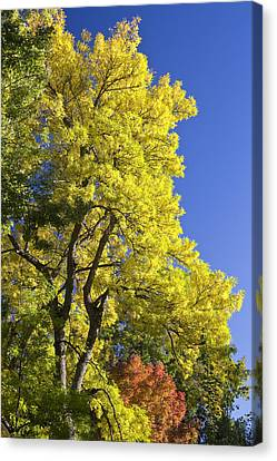 Green Orange Yellow And Blue Canvas Print by James BO  Insogna