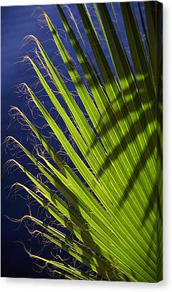 Green Palm Leaf Along The River Walk In San Antonio Texas Canvas Print by Randall Nyhof
