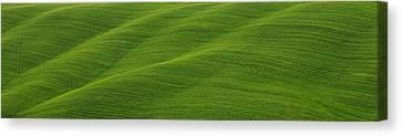 Green Panorama Canvas Print by Ivan Slosar