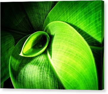 Green Paradise - Leaves By Sharon Cummings Canvas Print by Sharon Cummings