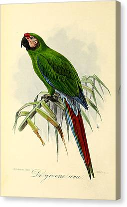 Green Parrot Canvas Print by J G Keulemans