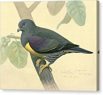 Green Pigeon Canvas Print by Louis Agassiz Fuertes