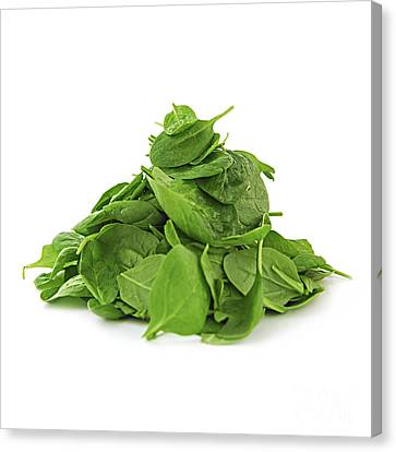 Green Spinach Canvas Print by Elena Elisseeva