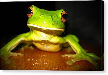 Green Tree Frog Canvas Print by Laura Hiesinger