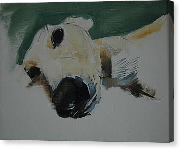 Greyhound, 2009 Oil On Paper Canvas Print by Sally Muir