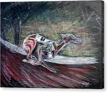 Greyhound Number Three Canvas Print by Tom Conway