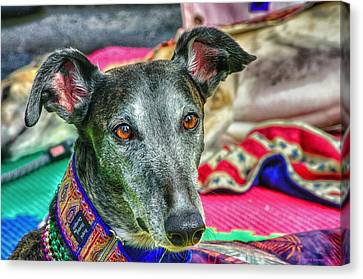 Greyhound Rescue  Canvas Print by Dennis Baswell