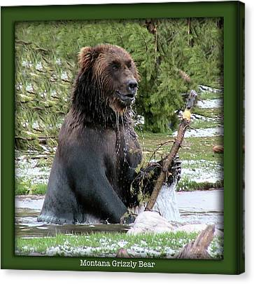 Grizzly Bear 07 Canvas Print by Thomas Woolworth