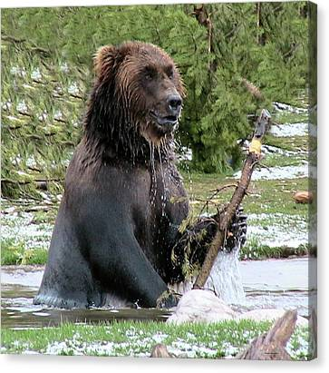 Grizzly Bear 6 Canvas Print by Thomas Woolworth