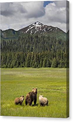 Grizzly Bear Mother And Cubs In Meadow Canvas Print by Richard Garvey-Williams