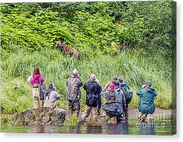 Grizzly Poses For Tourists Canvas Print by Darcy Michaelchuk