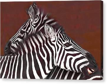 Grooming Zebras Canvas Print by Chris  Kusik