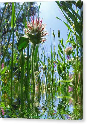 Ground Level Flora Canvas Print by Joyce Dickens