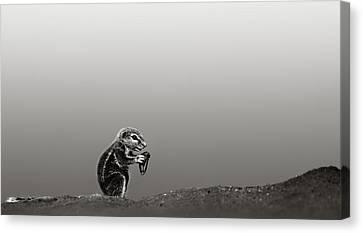Ground Squirrel Canvas Print by Johan Swanepoel