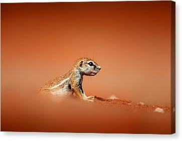 Ground Squirrel On Red Desert Sand Canvas Print by Johan Swanepoel