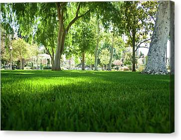 Ground View Canvas Print by Terry Thomas