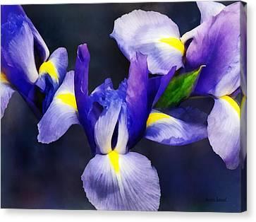 Group Of Japanese Irises Canvas Print by Susan Savad