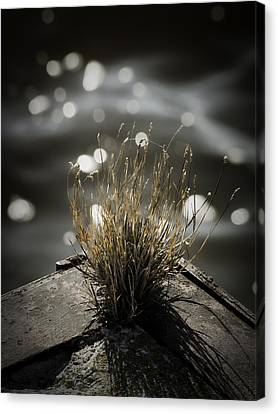 Growing Out Of Nothing Canvas Print by Thomas Young
