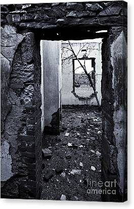 Growing Out Of Ruin Canvas Print by Mike  Dawson