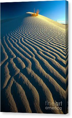 Guadalupe Dune Canvas Print by Inge Johnsson