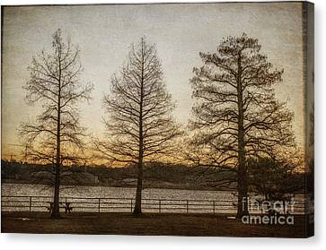 Guardian Trees Canvas Print by Terry Rowe
