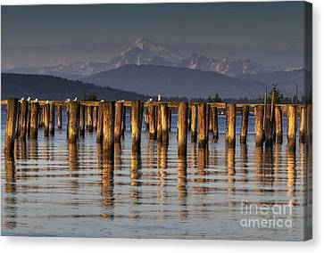 Guemes Channel Trail View Canvas Print by Mark Kiver