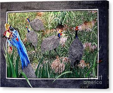 Guinea Fowl In Guinea Grass Canvas Print by Sylvie Heasman