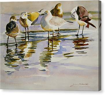 Gull Family Canvas Print by Julianne Felton