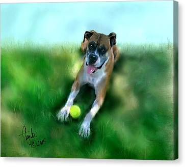 Gus The Rescue Dog Canvas Print by Colleen Taylor