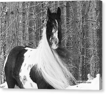 Gypsy Mare And Winter Wonderland Canvas Print by Feathered Gold Stables