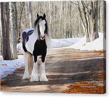 Gypsy Mare Looking On Canvas Print by Feathered Gold Stables