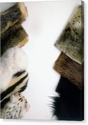 Hairseal Fur Canvas Print by Dorling Kindersley/uig